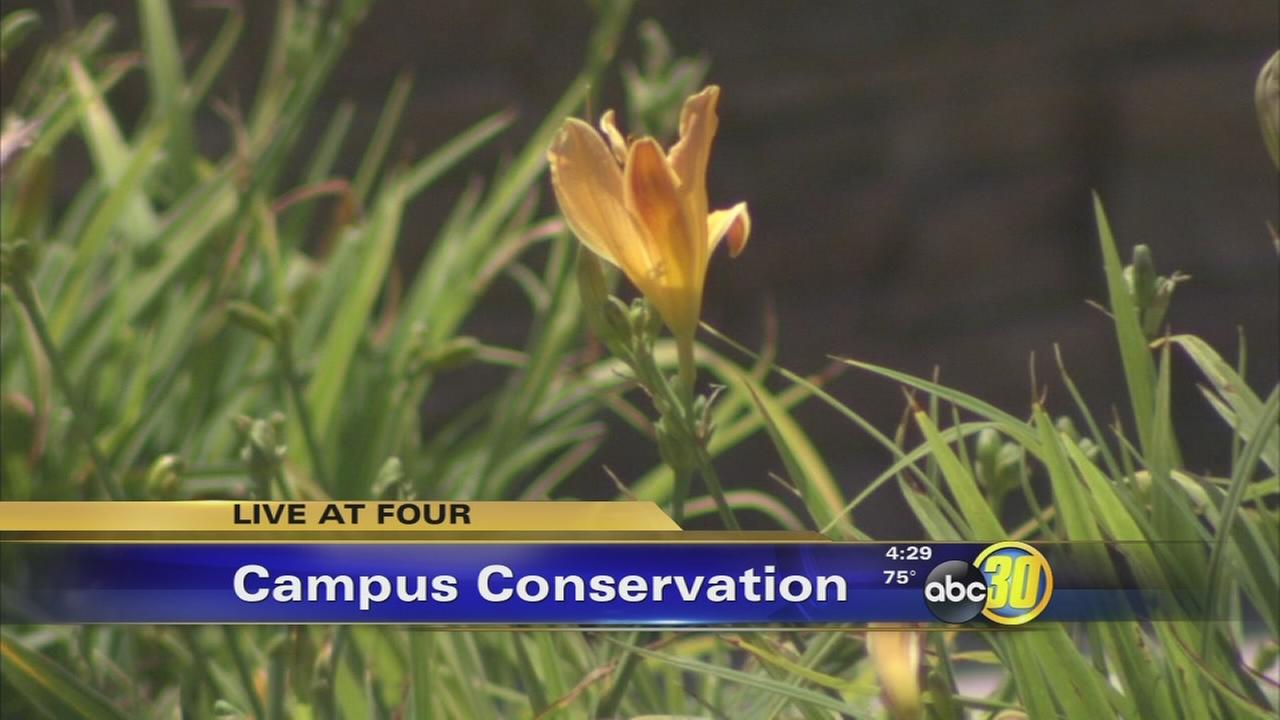 Clovis Unified School District looks to conserve water