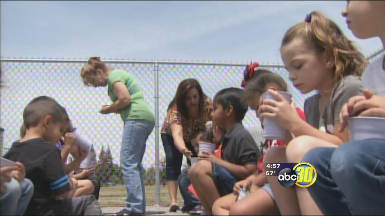 Kids in Visalia learning where the food they eat comes from