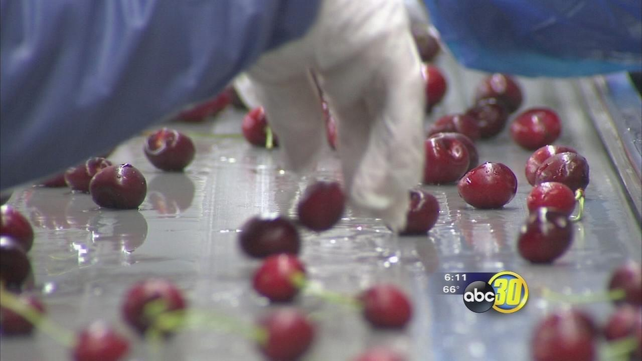 Reedley cherry facility meets global demand