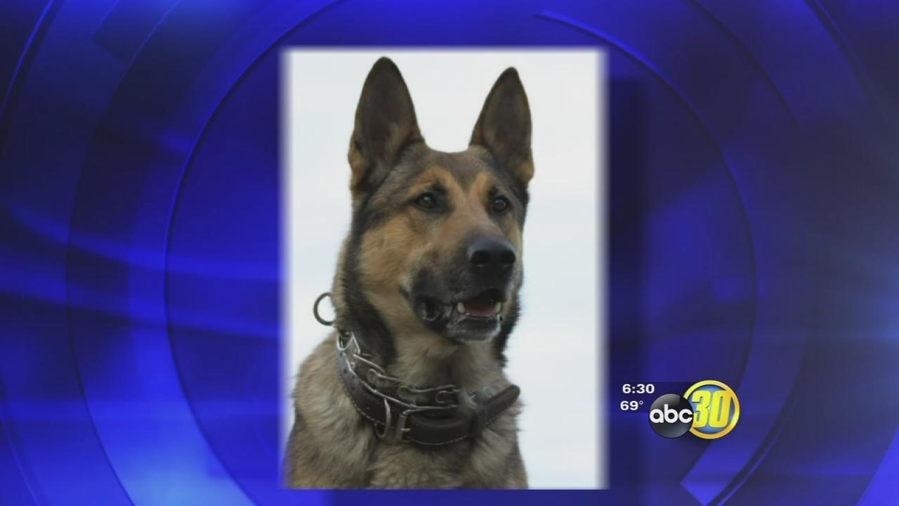 Investigation underway after Fresno Police K-9 attacks innocent bystander