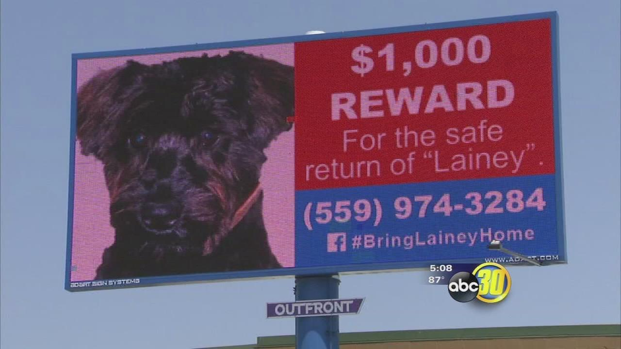 Businesses and strangers aid in search for missing dog