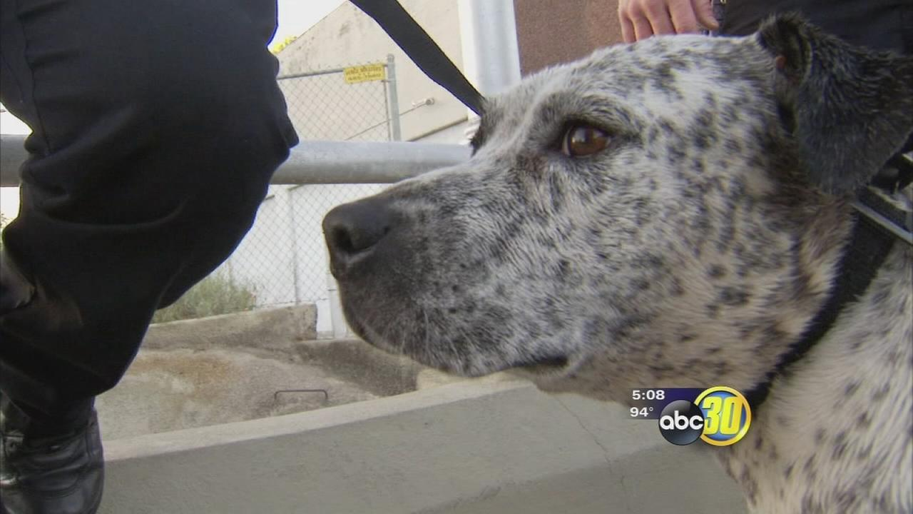Fresno police officer saves dog found in canal