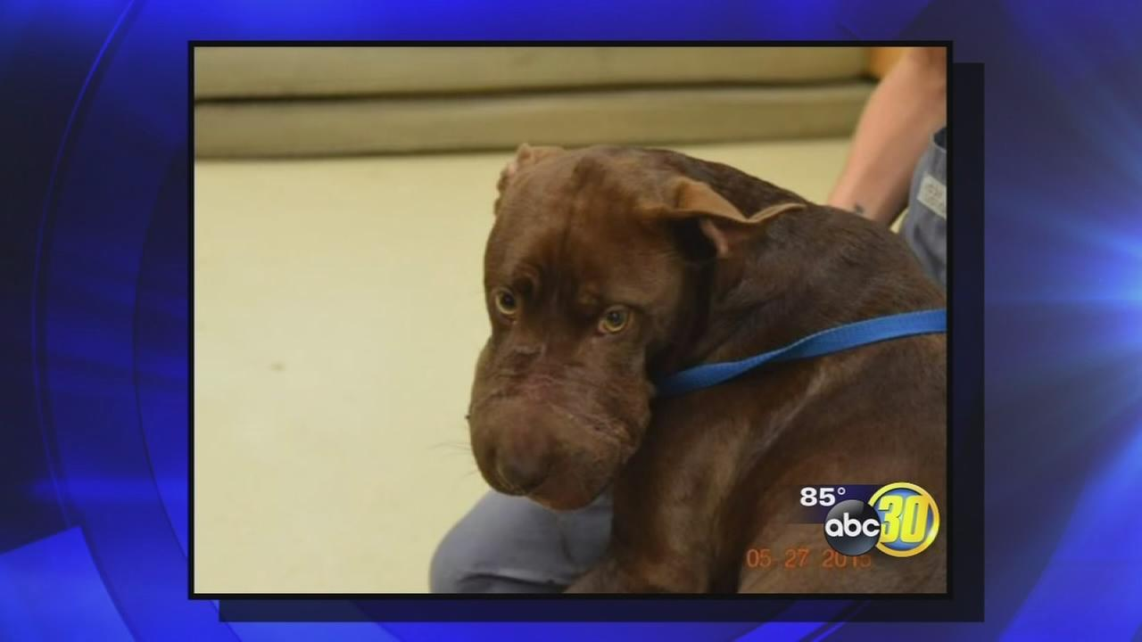 Dog found with muzzle taped shut in South Carolina