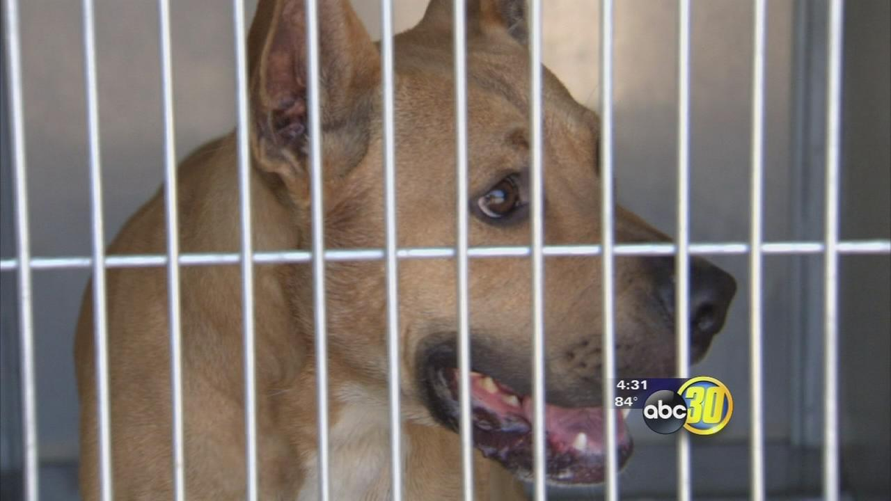 Fresno County seeks bids for new animal shelter operators
