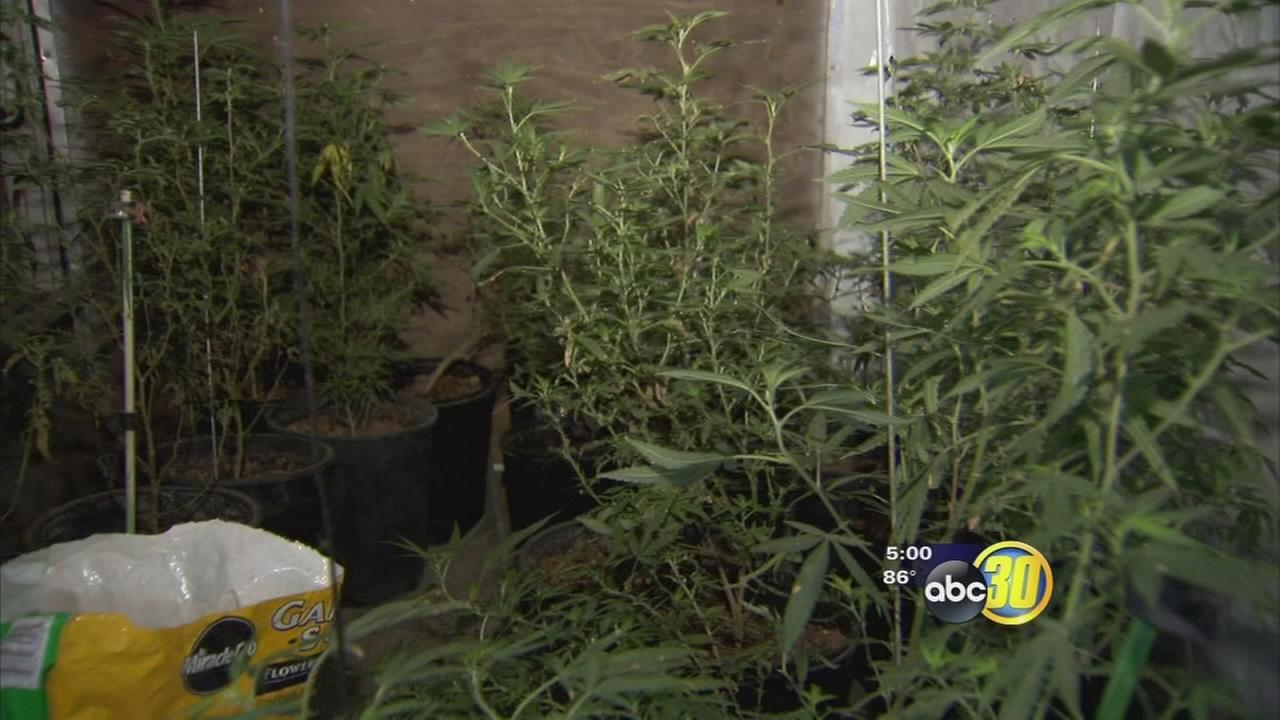 Teens stolen truck leads to pot grow bust in Fresno County