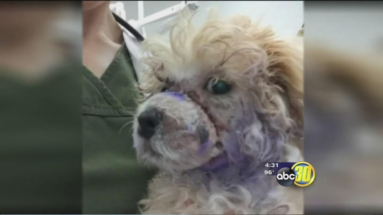 DAs office receives petition calling for animal abuse charges against Madera woman