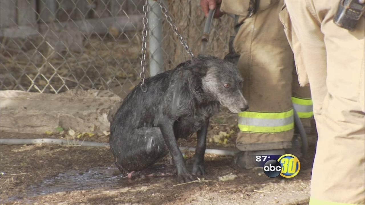 Fire in Southeast Fresno injures 2 dogs