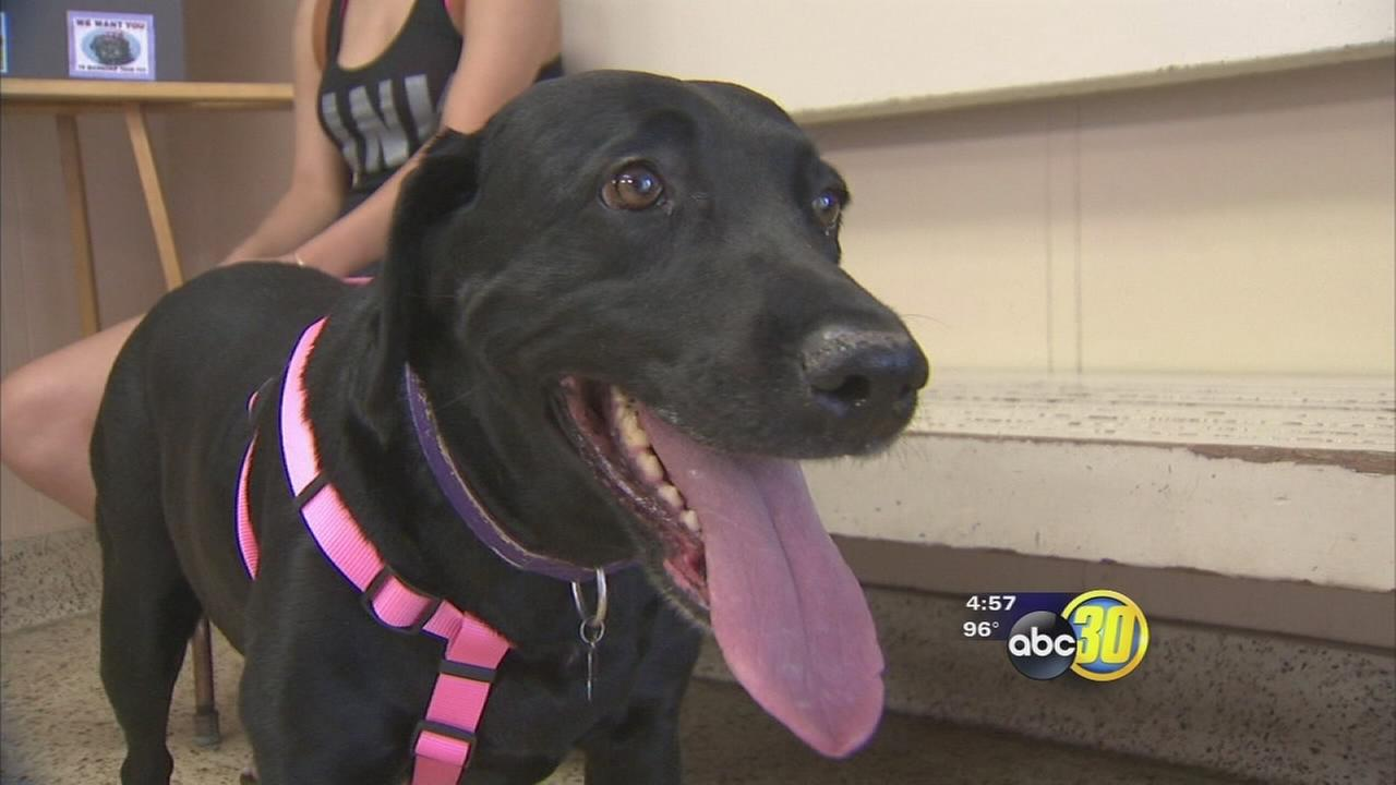 Tips to keep pets safe during Fourth of July celebrations