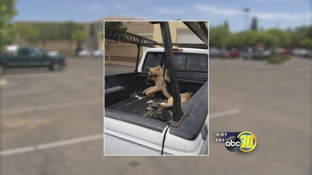 Man arrested after alleged animal abuse photo circulates on social media