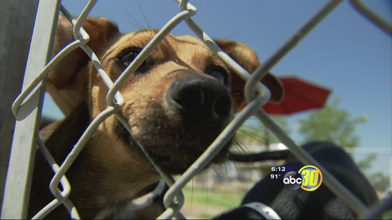 Tulare County proposal would make it easier for pet owners to address concerns