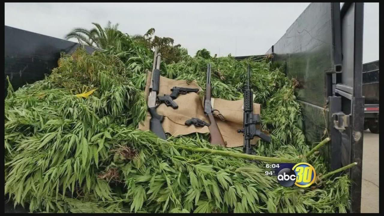 Deputies make $5.8 million pot bust in Tulare County