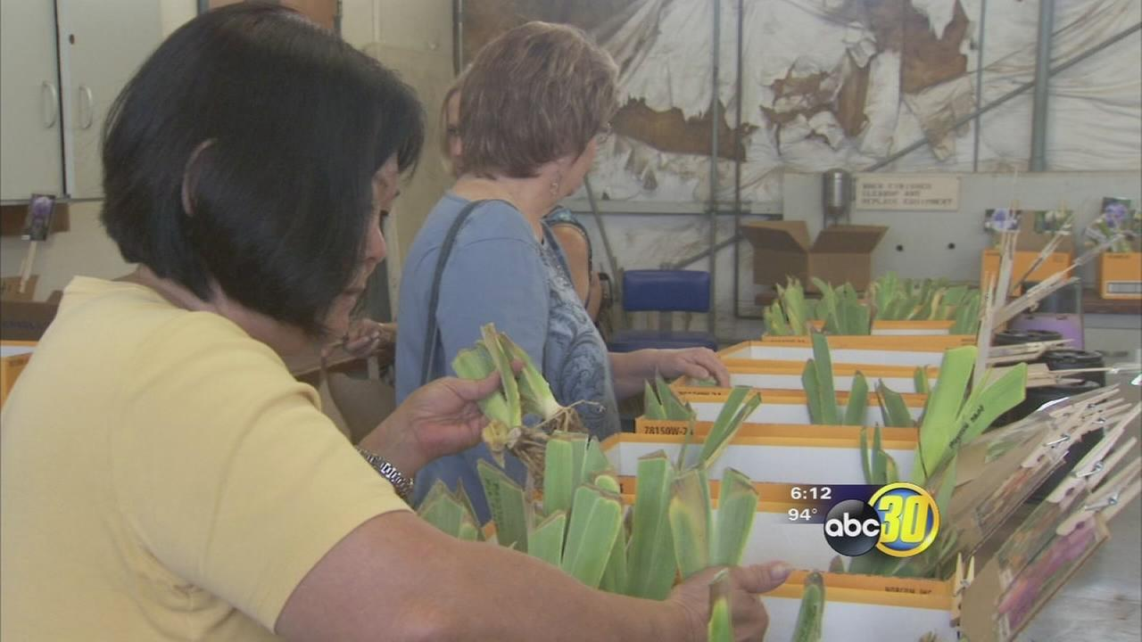 Annual plant sale held at Fresno State