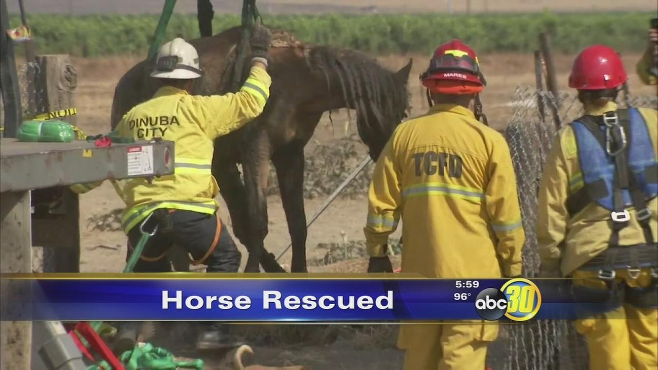 Firefighters rescue horse from mud pit in Orosi
