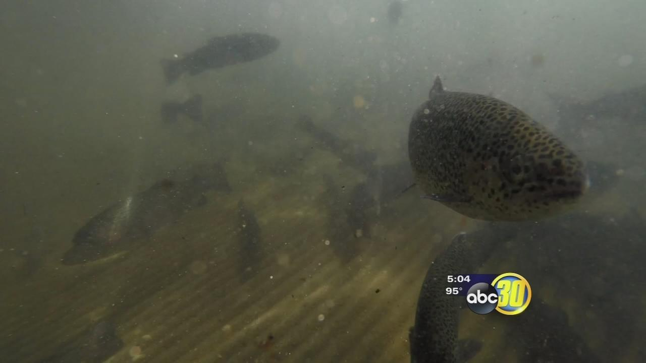 Drought conditions force San Joaquin Hatchery to evacuate fish