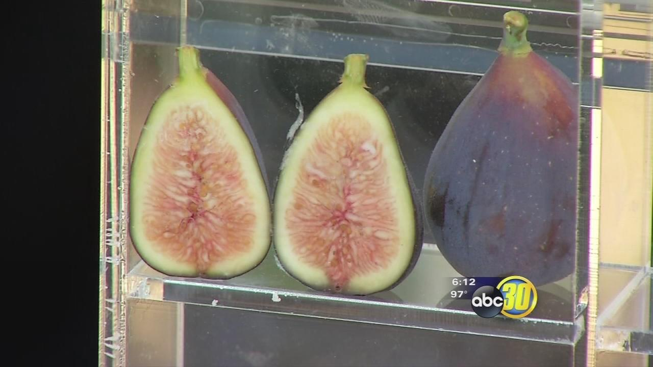 Fig Fest attracts hundreds to Fresno State