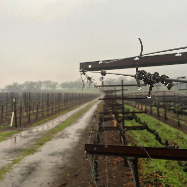 <div class='meta'><div class='origin-logo' data-origin='none'></div><span class='caption-text' data-credit='Photo submitted to KGO-TV by @therichlifeonabudget/Instagram'>A wet and rainy day is seen in Sonoma, Calif. on Tuesday, January 5, 2016.</span></div>