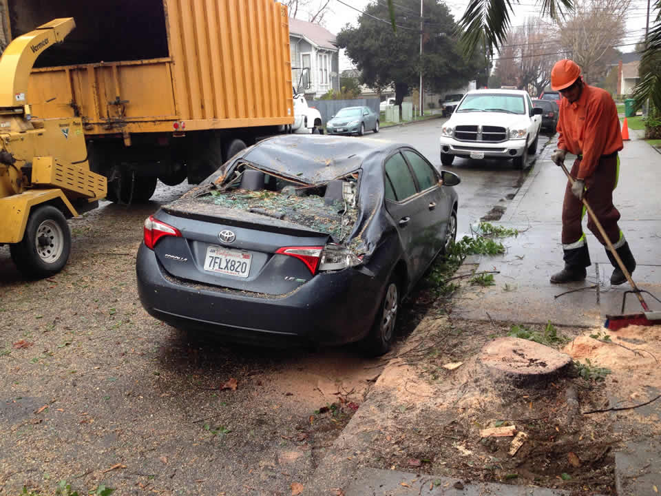 <div class='meta'><div class='origin-logo' data-origin='none'></div><span class='caption-text' data-credit='Photo submitted to KGO-TV via uReport'>A car was crushed by a downed tree in Alameda, Calif. on Wednesday, January 6, 2016.</span></div>