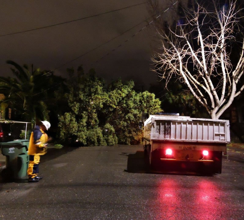 <div class='meta'><div class='origin-logo' data-origin='none'></div><span class='caption-text' data-credit='Photo submitted to KGO-TV via uReport'>Crews prepare to remove a downed tree that crushed a car in Alameda, Calif. on Wednesday, January 6, 2016.</span></div>