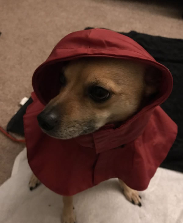 <div class='meta'><div class='origin-logo' data-origin='none'></div><span class='caption-text' data-credit='Photo submitted to KGO-TV by diehard626/Twitter'>This little guy looks ready for the rain! Share your weather photos using #abc7now.</span></div>