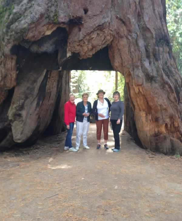 <div class='meta'><div class='origin-logo' data-origin='none'></div><span class='caption-text' data-credit='Photo submitted to KGO-TV by Margaret Shields/Facebook'>ABC7 viewers shared photos of their visit to the Calaveras, Calif. tunnel tree. The iconic tree toppled over during a massive storm in the Bay Area on Sunday, January 8, 2017.</span></div>