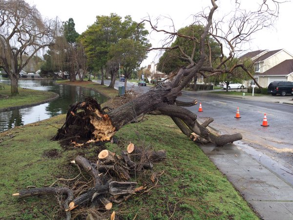 <div class='meta'><div class='origin-logo' data-origin='none'></div><span class='caption-text' data-credit='KGO-TV'>A Bay Area storm brought down a tree in Foster City, Calif. on Friday, January 22, 2016.</span></div>