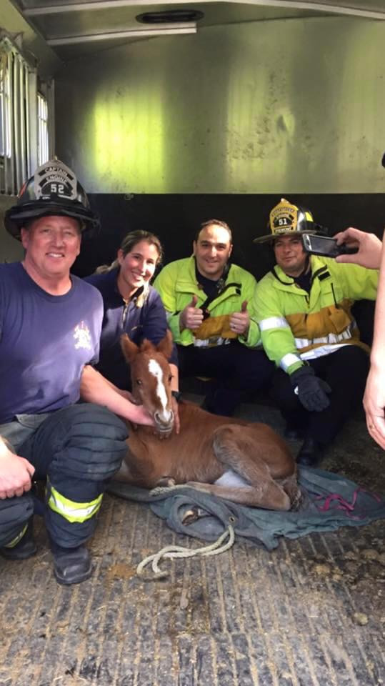 <div class='meta'><div class='origin-logo' data-origin='none'></div><span class='caption-text' data-credit='Fremont Police Department/Facebook'>A baby horse named Valentine was rescued from a ravine in Fremont, Calif. on Sunday, February 14, 2016.</span></div>