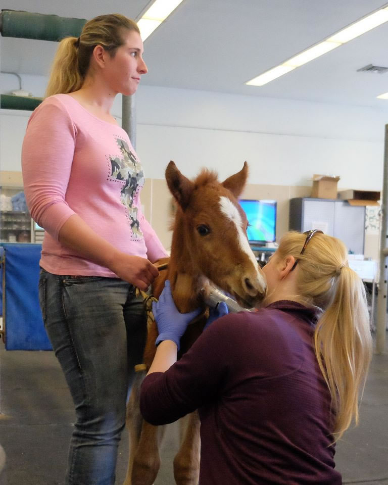 <div class='meta'><div class='origin-logo' data-origin='none'></div><span class='caption-text' data-credit='KGO-TV/Wayne Freedman'>A baby horse named Valentine that was rescued from a ravine in Fremont, Calif. is seen in Davis, Calif. on Tuesday, February 16, 2016.</span></div>