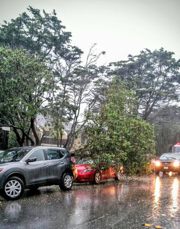 <div class='meta'><div class='origin-logo' data-origin='none'></div><span class='caption-text' data-credit='Photo submitted to KGO-TV by @mobnola/Twitter'>Powerful winds bring down a tree in Pacifica, Calif., on Saturday, March 5, 2016.</span></div>