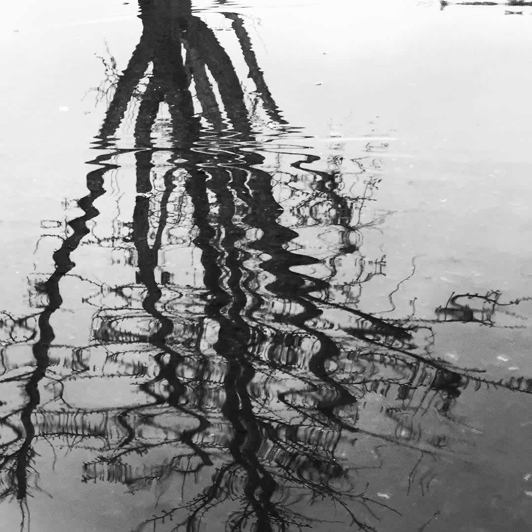 <div class='meta'><div class='origin-logo' data-origin='none'></div><span class='caption-text' data-credit='Photo submitted to KGO-TV by @gustavoarizmendi/Instagram'>A reflection of a tree in a flooded sidewalk in Sonoma County on Saturday, March 5, 2016.</span></div>