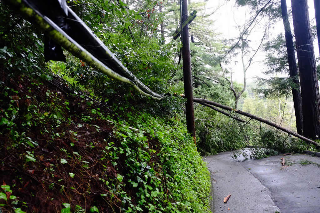 <div class='meta'><div class='origin-logo' data-origin='none'></div><span class='caption-text' data-credit='KGO-TV/Wayne Freedman'>Downed tree and power line on Molino Avenue in Mill Valley, Calif., on Friday, March 11, 2016.</span></div>