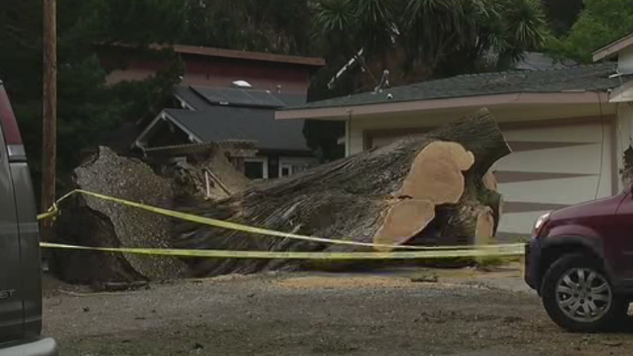 <div class='meta'><div class='origin-logo' data-origin='none'></div><span class='caption-text' data-credit='KGO-TV/Sergio Quintana'>This tree came down onto a house in Pacifica, Calif., on Saturday, March 12, 2016.</span></div>