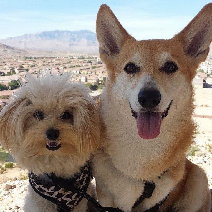"""<div class=""""meta image-caption""""><div class=""""origin-logo origin-image kgo""""><span>KGO</span></div><span class=""""caption-text"""">ABC7 News viewers and staff are sending in photos of their dogs in honor of National Puppy Day on March 23, 2015. (Photo submitted by Kiko/Facebook)</span></div>"""