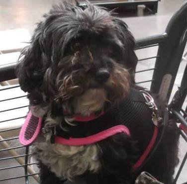 """<div class=""""meta image-caption""""><div class=""""origin-logo origin-image kgo""""><span>KGO</span></div><span class=""""caption-text"""">Meet Layla! ABC7 News viewers and staff are sending in photos of their dogs in honor of National Puppy Day on March 23, 2015. (Photo submitted by Rochelle/Facebook)</span></div>"""