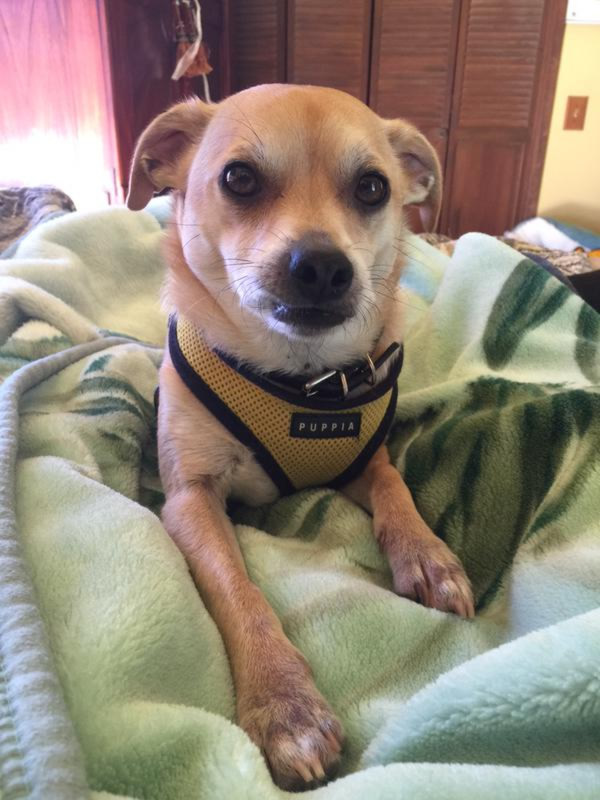 """<div class=""""meta image-caption""""><div class=""""origin-logo origin-image kgo""""><span>KGO</span></div><span class=""""caption-text"""">Meet Rafael! ABC7 News viewers are sending in photos of their dogs in honor of National Puppy Day on March 23, 2015. (Photo submitted by Leilani/Twitter)</span></div>"""