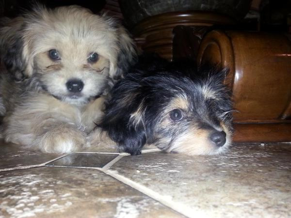 """<div class=""""meta image-caption""""><div class=""""origin-logo origin-image kgo""""><span>KGO</span></div><span class=""""caption-text"""">ABC7 News viewers are sending in photos of their dogs in honor of National Puppy Day on March 23, 2015. (Photo submitted by Lina/Twitter)</span></div>"""