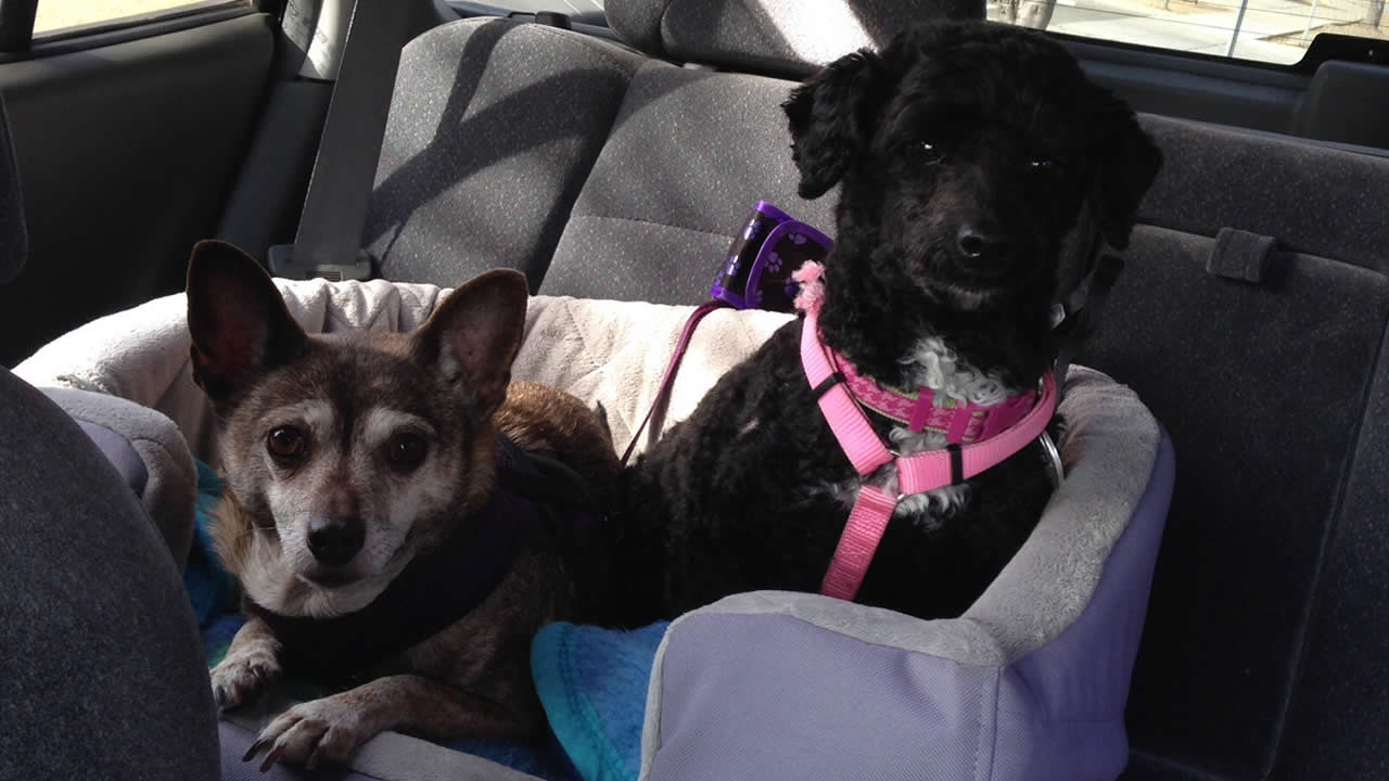 """<div class=""""meta image-caption""""><div class=""""origin-logo origin-image kgo""""><span>KGO</span></div><span class=""""caption-text"""">Meet Maddie Mae and Angel Ann! ABC7 News viewers are sending in photos of their dogs in honor of National Puppy Day on March 23, 2015. (Photo submitted by Becky/uReport)</span></div>"""