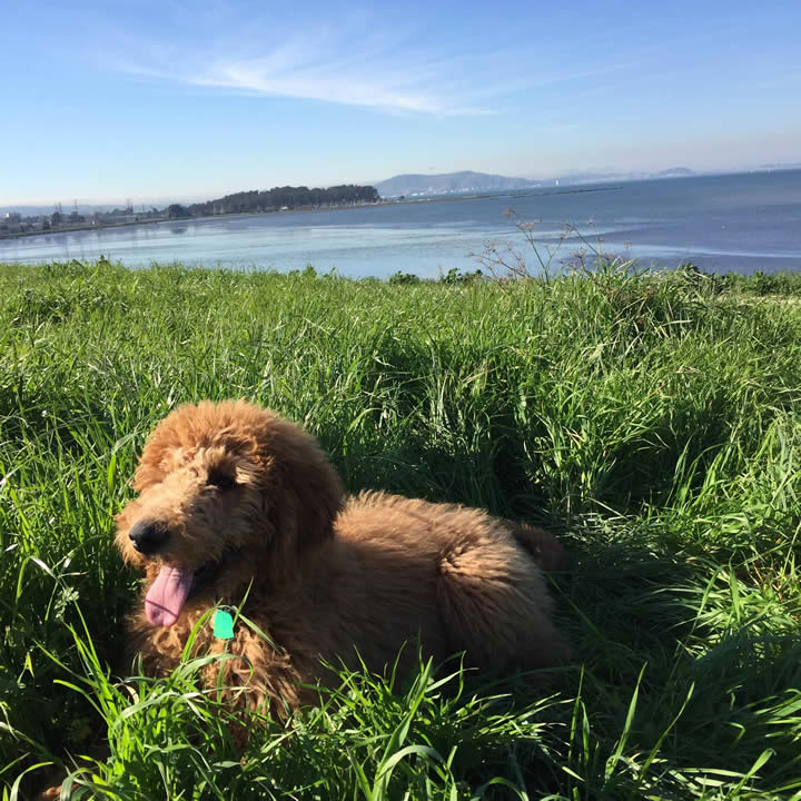 """<div class=""""meta image-caption""""><div class=""""origin-logo origin-image kgo""""><span>KGO</span></div><span class=""""caption-text"""">Meet 6-month-old Rupert! ABC7 News viewers are sending in photos of their dogs in honor of National Puppy Day on March 23, 2015. (Photo submitted by Christine/uReport)</span></div>"""