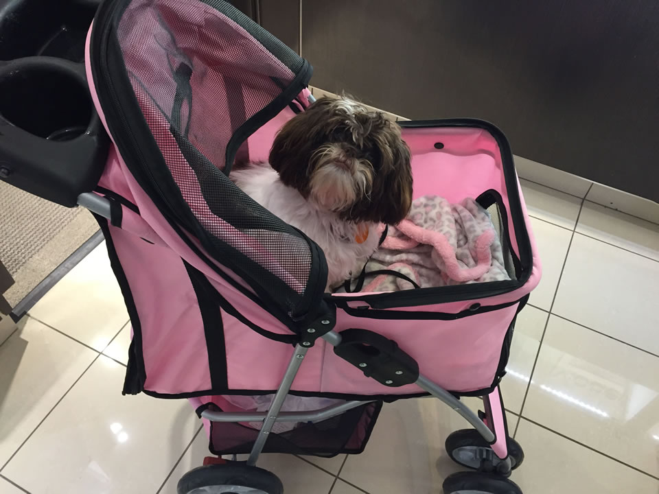 """<div class=""""meta image-caption""""><div class=""""origin-logo origin-image kgo""""><span>KGO</span></div><span class=""""caption-text"""">Meet Coco! ABC7 News viewers are sending in photos of their dogs in honor of National Puppy Day on March 23, 2015. (Photo submitted by Lynda/uReport)</span></div>"""