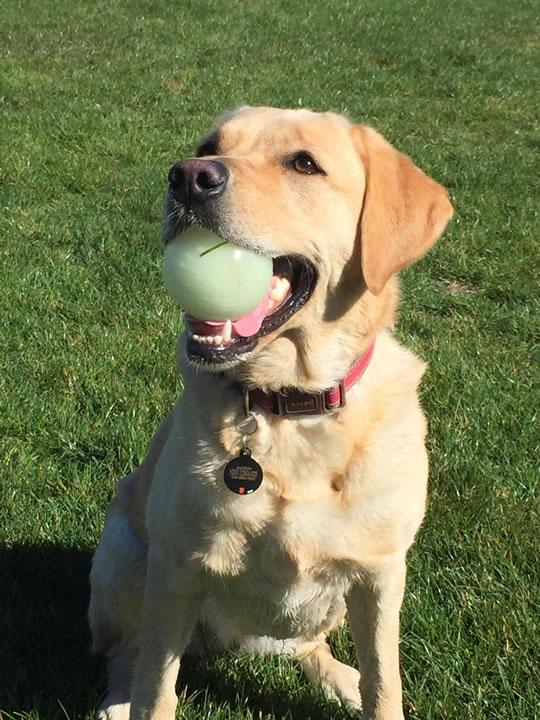 """<div class=""""meta image-caption""""><div class=""""origin-logo origin-image kgo""""><span>KGO</span></div><span class=""""caption-text"""">Meet Maddie! ABC7 News viewers are sending in photos of their dogs in honor of National Puppy Day on March 23, 2015. (Photo submitted by Zach/uReport)</span></div>"""