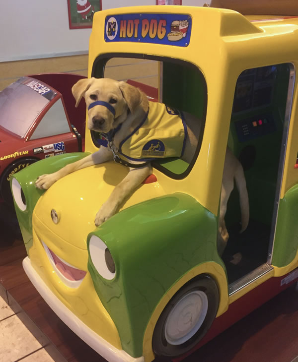 """<div class=""""meta image-caption""""><div class=""""origin-logo origin-image kgo""""><span>KGO</span></div><span class=""""caption-text"""">Canine Companions for Independence puppy Digby is at Stoneridge Mall. ABC7 News viewers are sending in photos of their dogs in honor of National Puppy Day on March 23, 2015. (Photo submitted by David/uReport)</span></div>"""