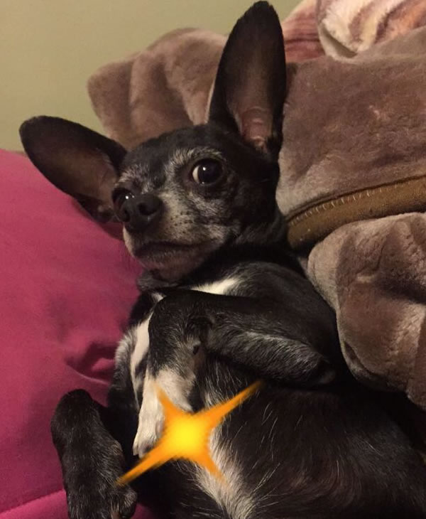 """<div class=""""meta image-caption""""><div class=""""origin-logo origin-image kgo""""><span>KGO</span></div><span class=""""caption-text"""">Codin's owner loves him very much! ABC7 News viewers are sending in photos of their dogs in honor of National Puppy Day on March 23, 2015. (Photo submitted by Jessica/uReport)</span></div>"""