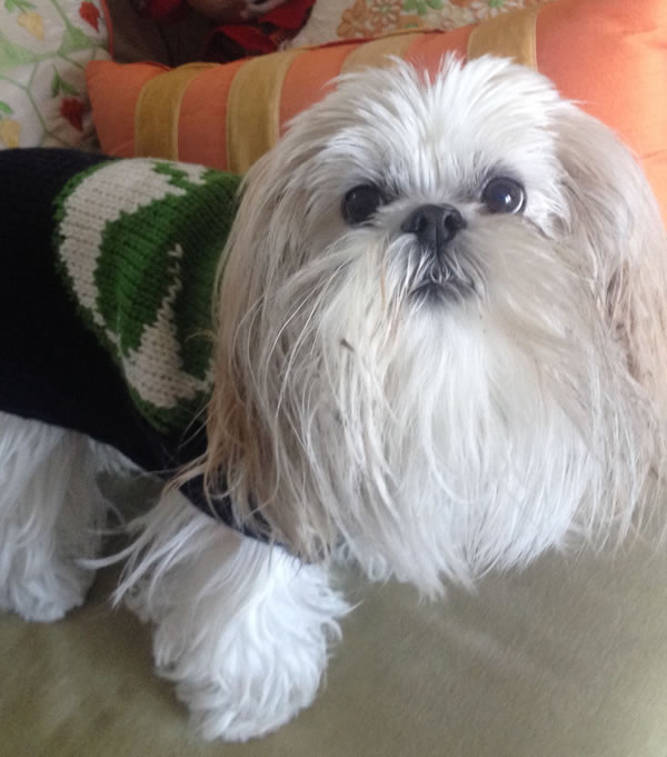 """<div class=""""meta image-caption""""><div class=""""origin-logo origin-image kgo""""><span>KGO</span></div><span class=""""caption-text"""">Michele is an energetic and intelligent Lhasa Apso. ABC7 News viewers are sending in photos of their dogs in honor of National Puppy Day on March 23, 2015. (Photo submitted by Melanie/uReport)</span></div>"""