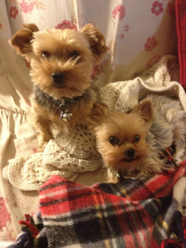 """<div class=""""meta image-caption""""><div class=""""origin-logo origin-image kgo""""><span>KGO</span></div><span class=""""caption-text"""">Good morning from Pica and Ebeneezer! ABC7 News viewers are sending in photos of their dogs in honor of National Puppy Day on March 23, 2015. (Photo submitted by Lulu/uReport)</span></div>"""