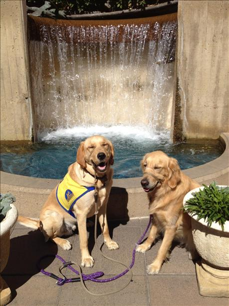 """<div class=""""meta image-caption""""><div class=""""origin-logo origin-image kgo""""><span>KGO</span></div><span class=""""caption-text"""">Canine companions pose for a photo at Stanford Shopping Center. ABC7 News viewers are sending in photos of their dogs in honor of National Puppy Day on March 23, 2015. (Photo submitted by JoAnn Golden/uReport)</span></div>"""