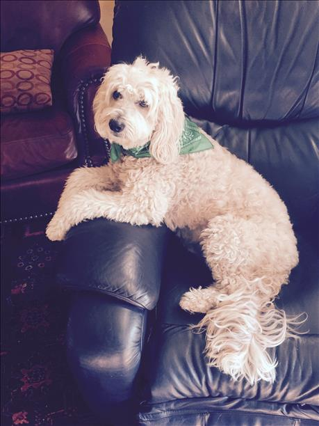 """<div class=""""meta image-caption""""><div class=""""origin-logo origin-image kgo""""><span>KGO</span></div><span class=""""caption-text"""">Hello, my name is Elvis. ABC7 News viewers are sending in photos of their dogs in honor of National Puppy Day on March 23, 2015. (Photo submitted by Roger Nelson/uReport)</span></div>"""
