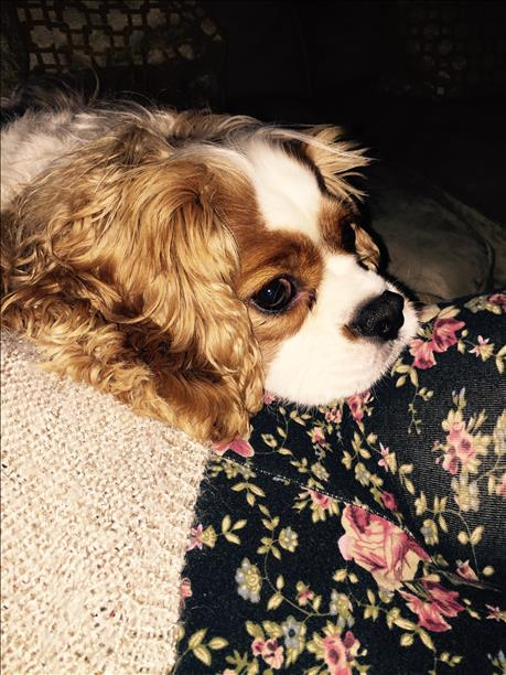 """<div class=""""meta image-caption""""><div class=""""origin-logo origin-image kgo""""><span>KGO</span></div><span class=""""caption-text"""">ABC7 News viewers are sending in photos of their dogs in honor of National Puppy Day on March 23, 2015. (Photo submitted by anonymous user/uReport)</span></div>"""