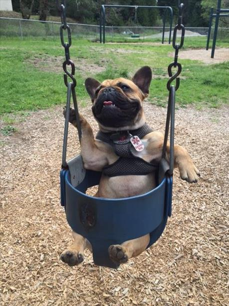 """<div class=""""meta image-caption""""><div class=""""origin-logo origin-image kgo""""><span>KGO</span></div><span class=""""caption-text"""">DooDah loves to swing! ABC7 News viewers are sending in photos of their dogs in honor of National Puppy Day on March 23, 2015. (Photo submitted by Mikela Cameron/uReport)</span></div>"""