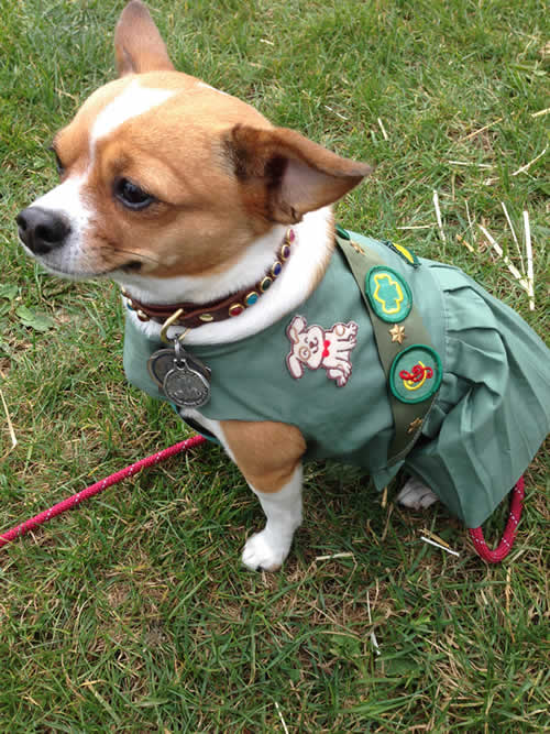 """<div class=""""meta image-caption""""><div class=""""origin-logo origin-image kgo""""><span>KGO</span></div><span class=""""caption-text"""">Lil Bit lives in San Francisco's Inner Sunset District. ABC7 News viewers are sending in photos of their dogs in honor of National Puppy Day on March 23, 2015. (Photo submitted by anonymous user/uReport)</span></div>"""