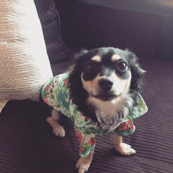 """<div class=""""meta image-caption""""><div class=""""origin-logo origin-image kgo""""><span>KGO</span></div><span class=""""caption-text"""">Meet Rez! ABC7 News viewers and staff are sending in photos of their dogs in honor of National Puppy Day on March 23, 2015. (Photo submitted by Natassja/Twitter)</span></div>"""