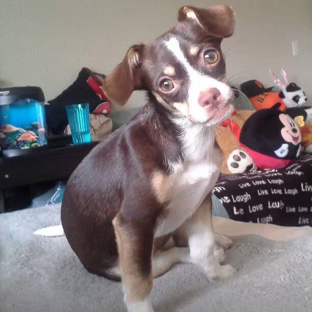 """<div class=""""meta image-caption""""><div class=""""origin-logo origin-image none""""><span>none</span></div><span class=""""caption-text"""">Meet Natsumi!  ABC7 News viewers and staff are sending in photos of their dogs in honor of National Puppy day on March 23, 2015. ( KGO-TV/uReport)</span></div>"""